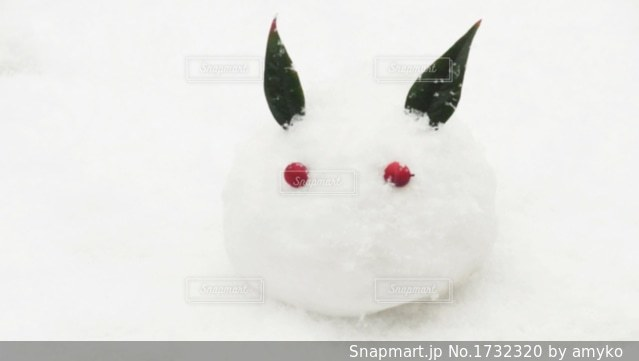 雪うさぎの写真・画像素材[1732320]