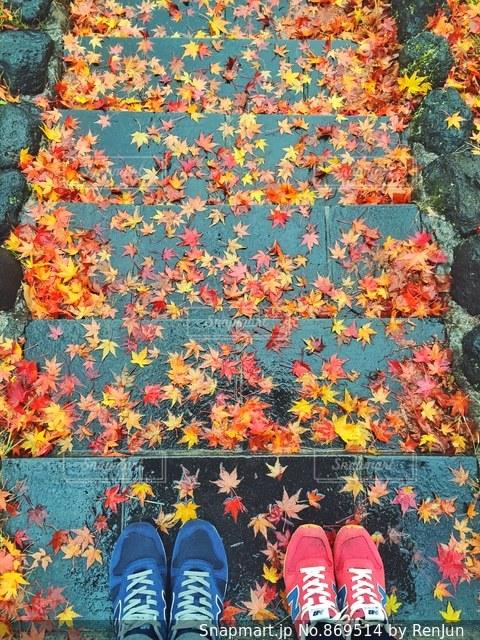 色とりどりの花のグループの写真・画像素材[869514]