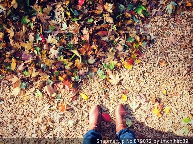 秋の落ち葉の写真・画像素材[879072]