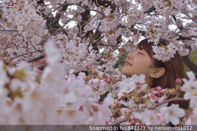 ピンクの花🌸 - No.842323