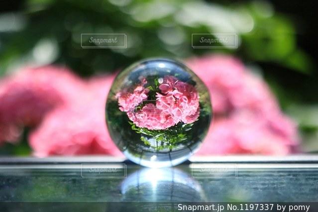 ガラス玉に映るうちの紫陽花の写真・画像素材[1197337]