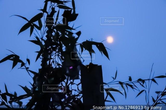 七夕の夜の写真・画像素材[1286913]
