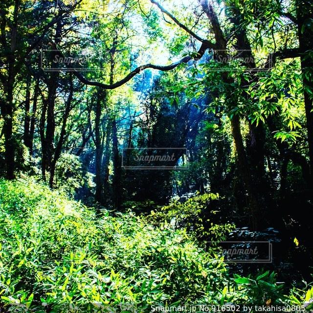 森の中の木の写真・画像素材[916502]