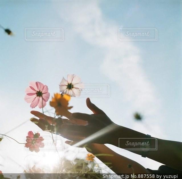 曇りの日に花の花瓶の写真・画像素材[887558]