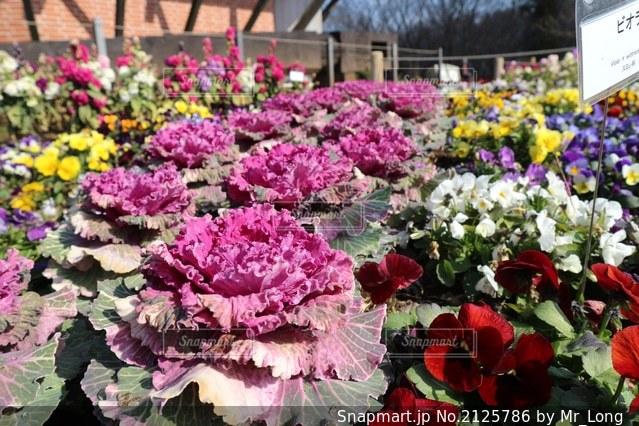 花のクローズアップの写真・画像素材[2125786]