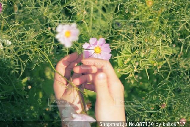 花を持っている手の写真・画像素材[887130]