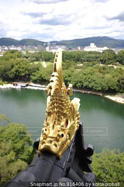 烏城の金の鯱の写真・画像素材[916406]