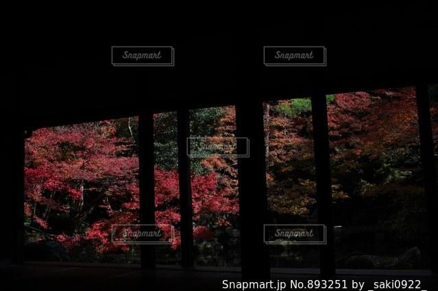 暗い部屋での花の写真・画像素材[893251]