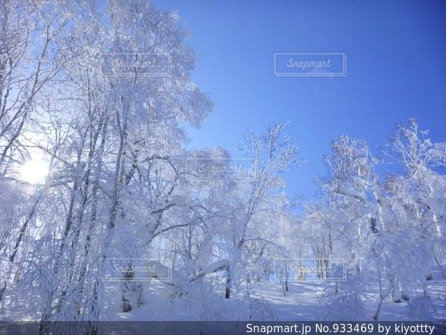 雪に覆われた木の写真・画像素材[933469]