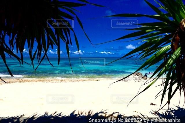 ヤシの木とビーチ - No.908259