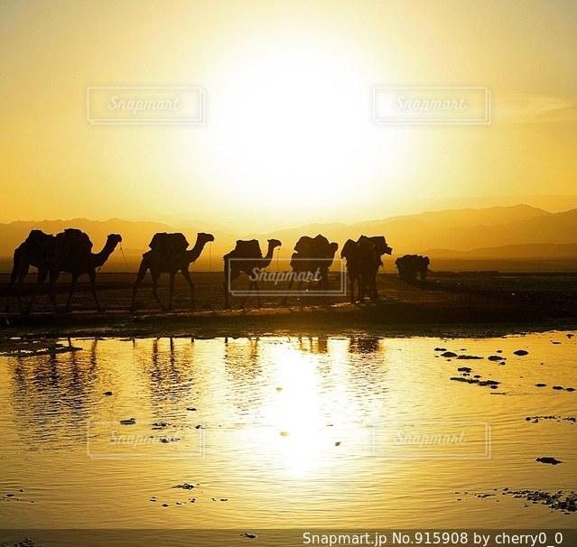 水の体の横に立っている人のグループの写真・画像素材[915908]