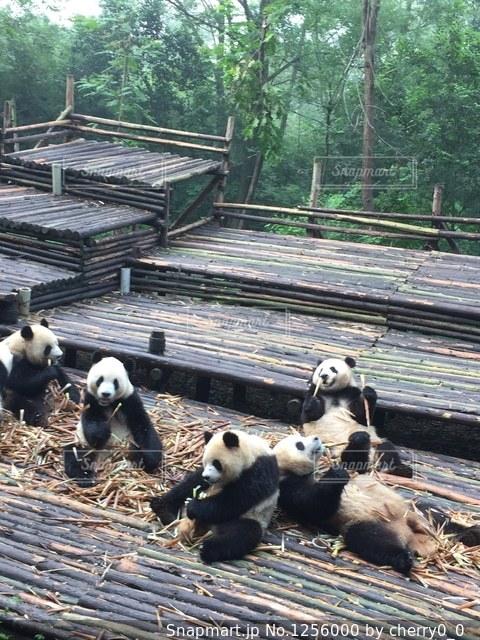 木製フェンスの上に座っているぬいぐるみの動物のグループの写真・画像素材[1256000]
