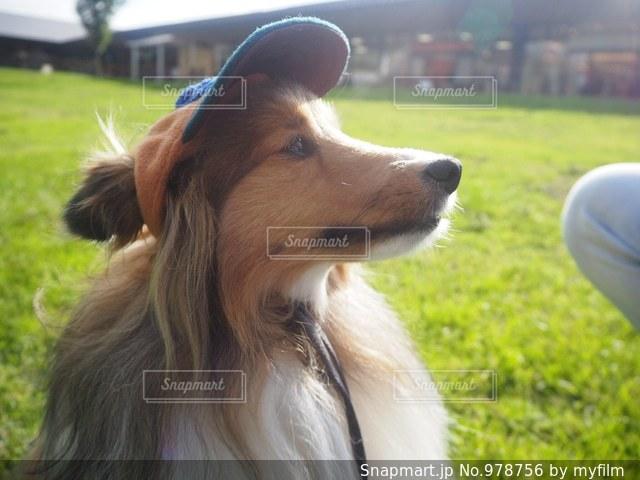 近くに犬のアップの写真・画像素材[978756]