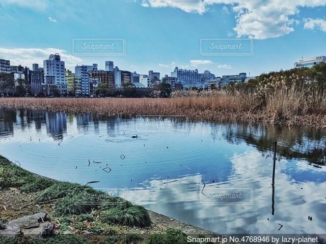鏡のような池の写真・画像素材[4768946]