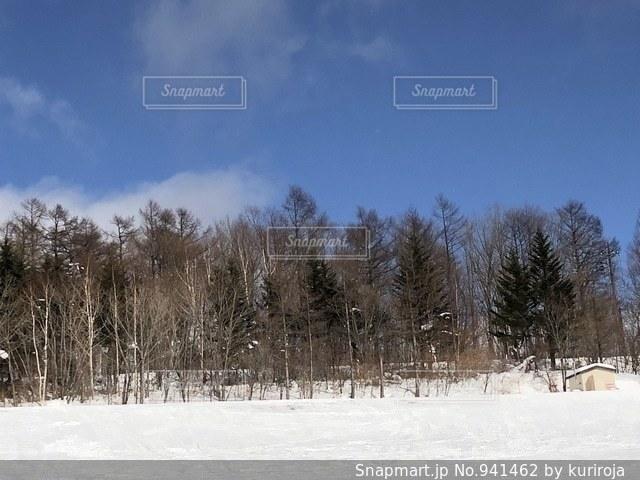 雪に覆われた木 - No.941462