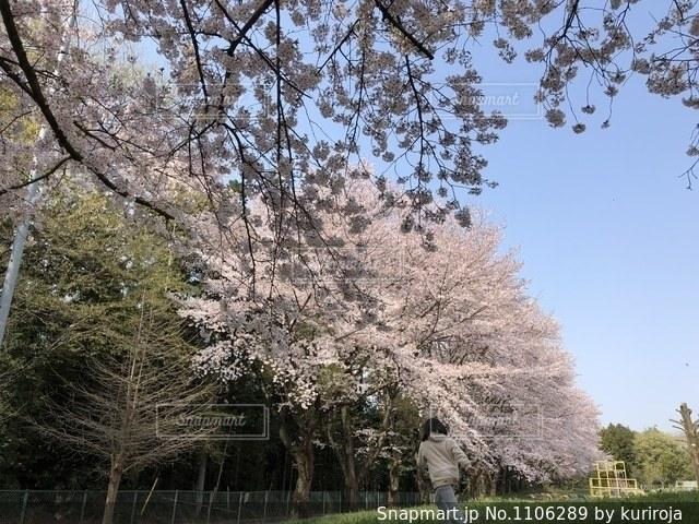 森の大きな木の写真・画像素材[1106289]