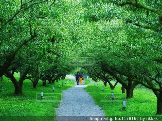 緑の草のツリーの写真・画像素材[1178162]