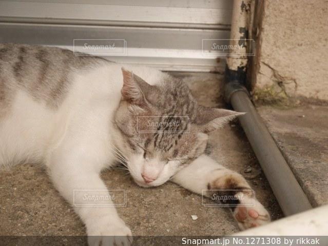 地面に横になっている猫の写真・画像素材[1271308]