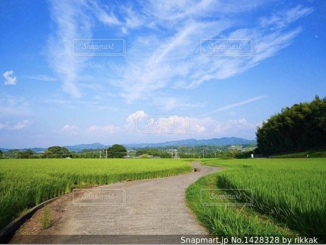 背景の木と大規模なグリーン フィールドの写真・画像素材[1428328]