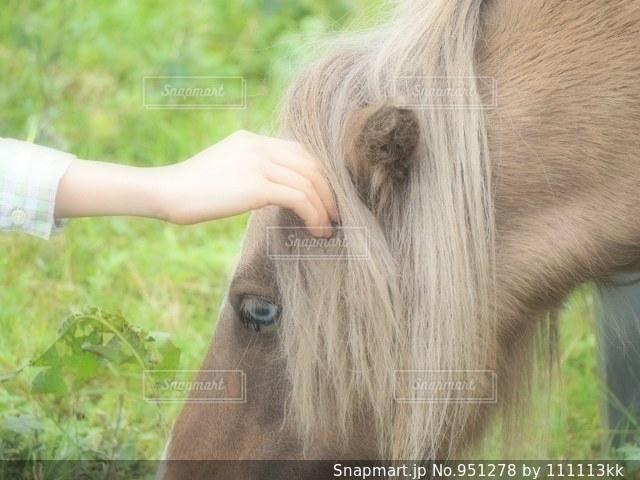 近くに馬のアップの写真・画像素材[951278]