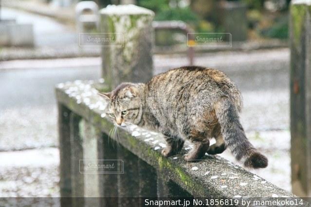 猫の花見の写真・画像素材[1856819]