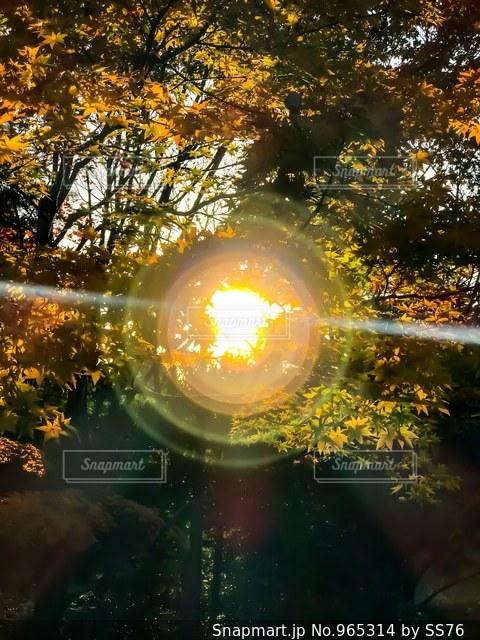 逆光の黄昏の写真・画像素材[965314]