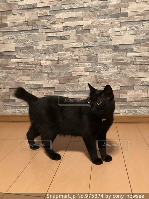 おしゃれ壁紙と猫の写真・画像素材[975874]