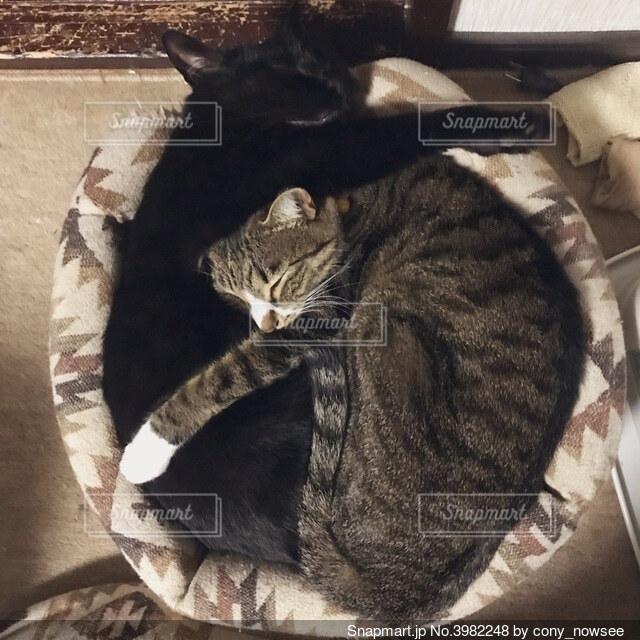抱き合って寝るネコの写真・画像素材[3982248]