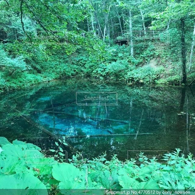 青い池の写真・画像素材[4770512]