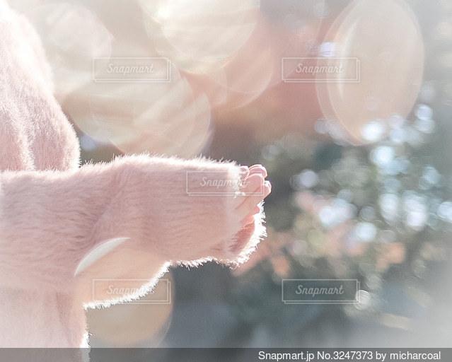 やわらかな日差しの写真・画像素材[3247373]
