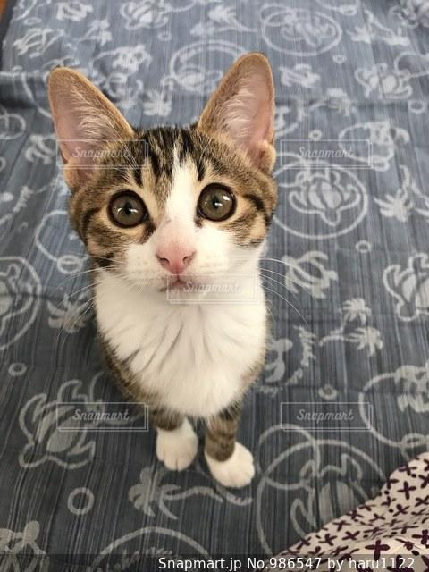 餌待ち猫ちゃん🐱の写真・画像素材[986547]