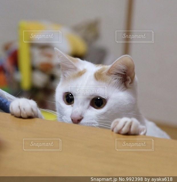 テーブルの上に座って猫 - No.992398