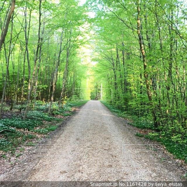 森の中の土の道の写真・画像素材[1167428]