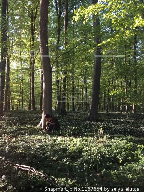 デンマークの森🇩🇰の写真・画像素材[1167654]