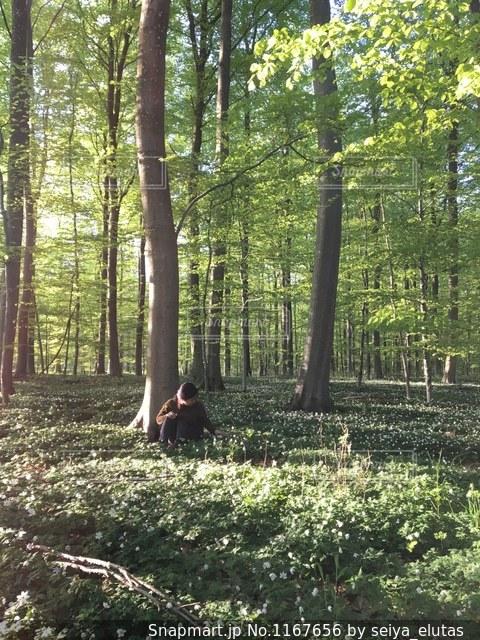 デンマークの森🇩🇰の写真・画像素材[1167656]