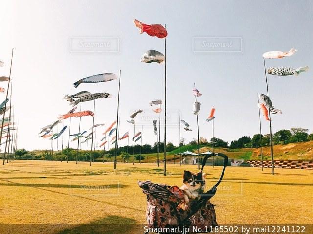 フィールドに凧の飛行の人々 のグループの写真・画像素材[1185502]