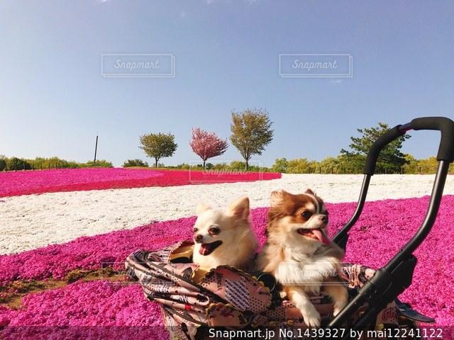 草の中に座っている犬の写真・画像素材[1439327]