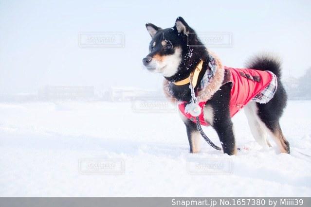 雪と小梅の写真・画像素材[1657380]
