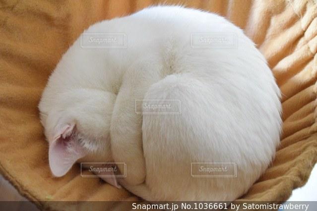 ベッドの上で寝ている犬の写真・画像素材[1036661]