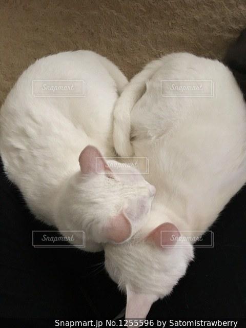 ハート型の猫の写真・画像素材[1255596]