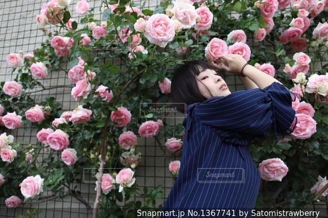 薔薇の写真・画像素材[1367741]