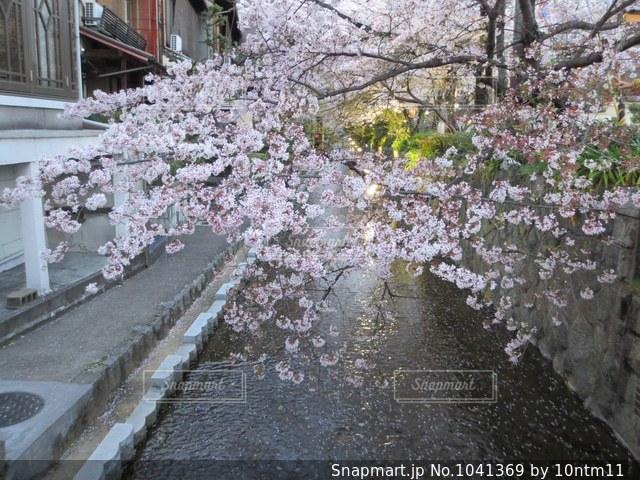 日本の春の写真・画像素材[1041369]