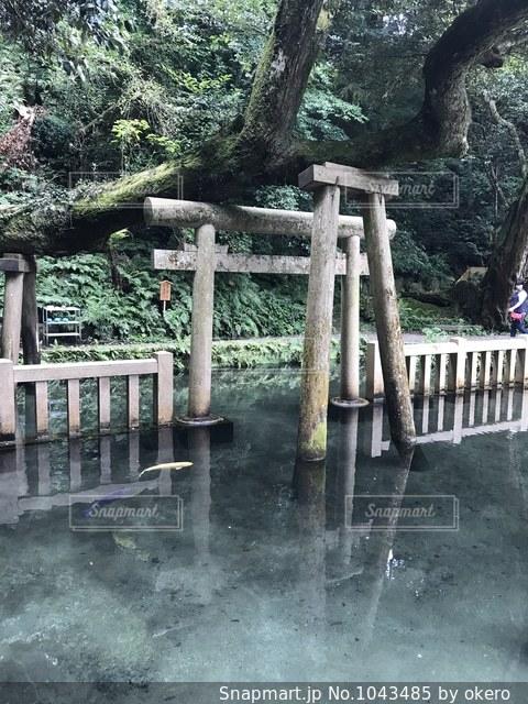 鹿島神宮 御手洗池の写真・画像素材[1043485]