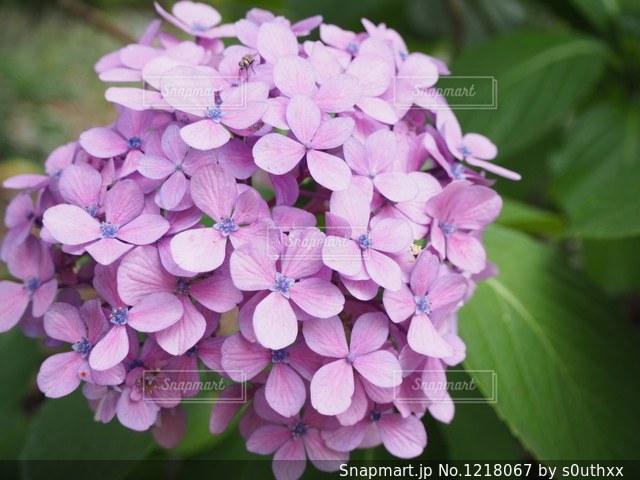 近くの花のアップの写真・画像素材[1218067]
