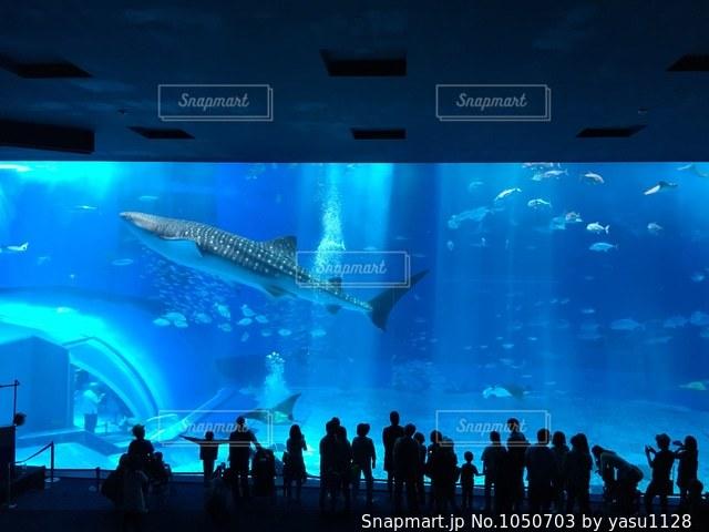 バック グラウンドで沖縄美ら海水族館とステージ上の人のグループの写真・画像素材[1050703]