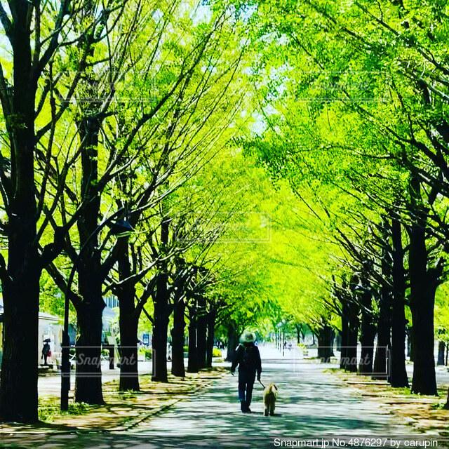 いつもの散歩道の写真・画像素材[4876297]