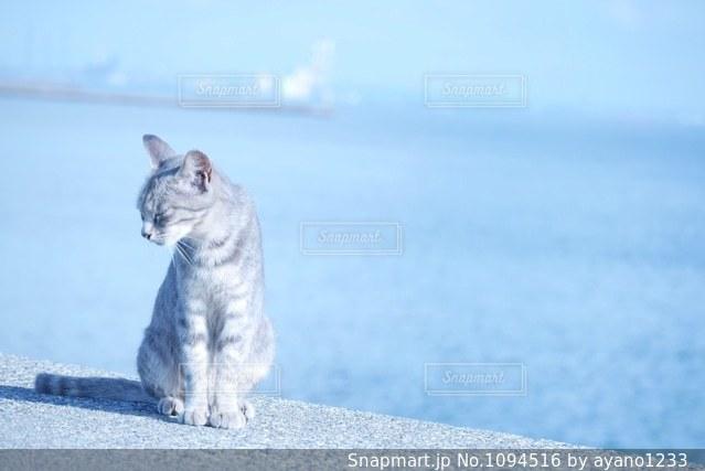 海と猫の写真・画像素材[1094516]