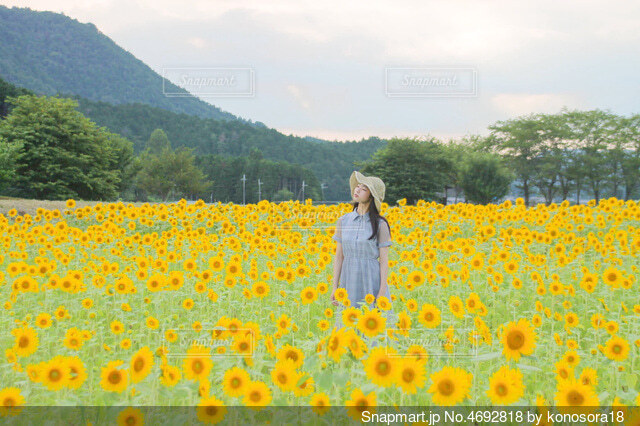 ひまわり畑と少女の写真・画像素材[4692818]