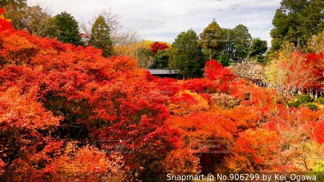 森の中の赤いツリー - No.906299