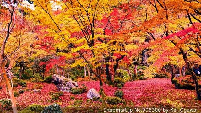 フォレスト内のツリーの写真・画像素材[906300]